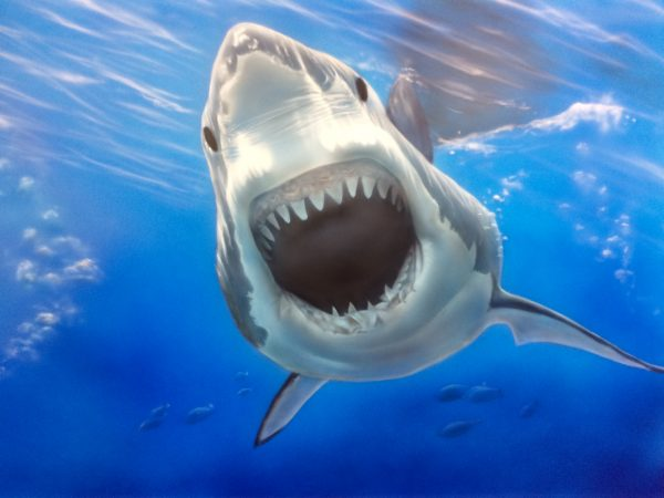 エアブラシアートサメの絵
