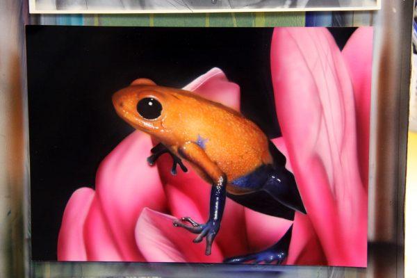 エアブラシアート カエルの絵